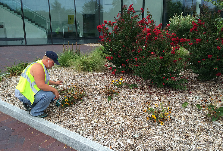 SLM Landscaping Beds